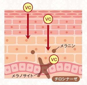 VCエチルで紫外線対策、シミにも効果を発揮
