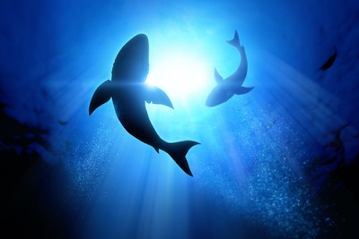 スクワランはサメから採取している成分!