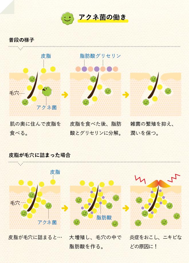 アクネ菌の働き
