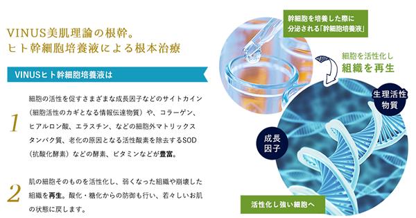 ヒト幹細胞培養エキスで細胞を活性化する!