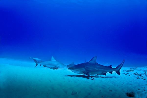 PG2 マリーンリッチの由来は海の恵みをたっぷり配合!