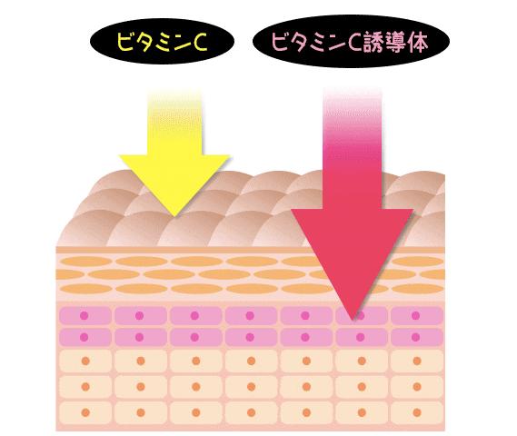 ビタミンC誘導体|ヌルホワイト