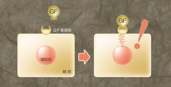 ヒト幹細胞エキスはエイジングケアの宝庫