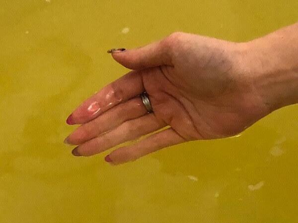きき湯 FINEHEAT(ファインヒート)入浴前と入浴後の表面体温変化