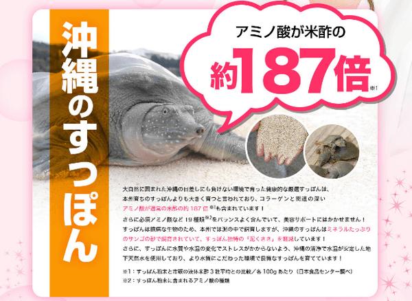 沖縄のすっぽんはアミノ酸がたっぷり
