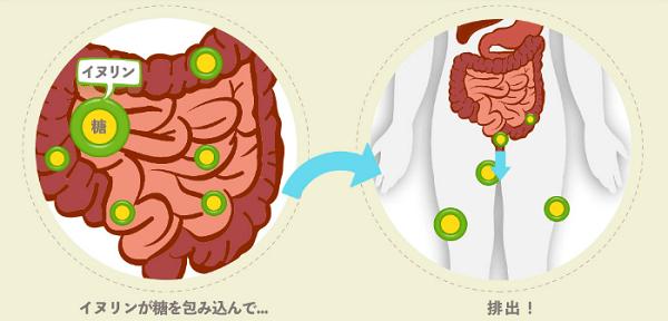 水溶性食物繊維イヌリンの力で糖の吸収を抑制