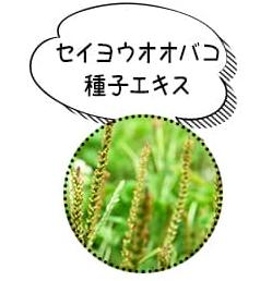 セイヨウオオバコ種子エキス|ヌルホワイト